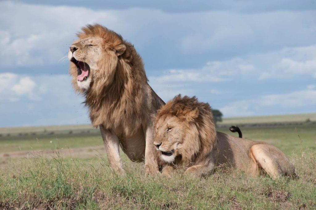 Destination Kruger National Park