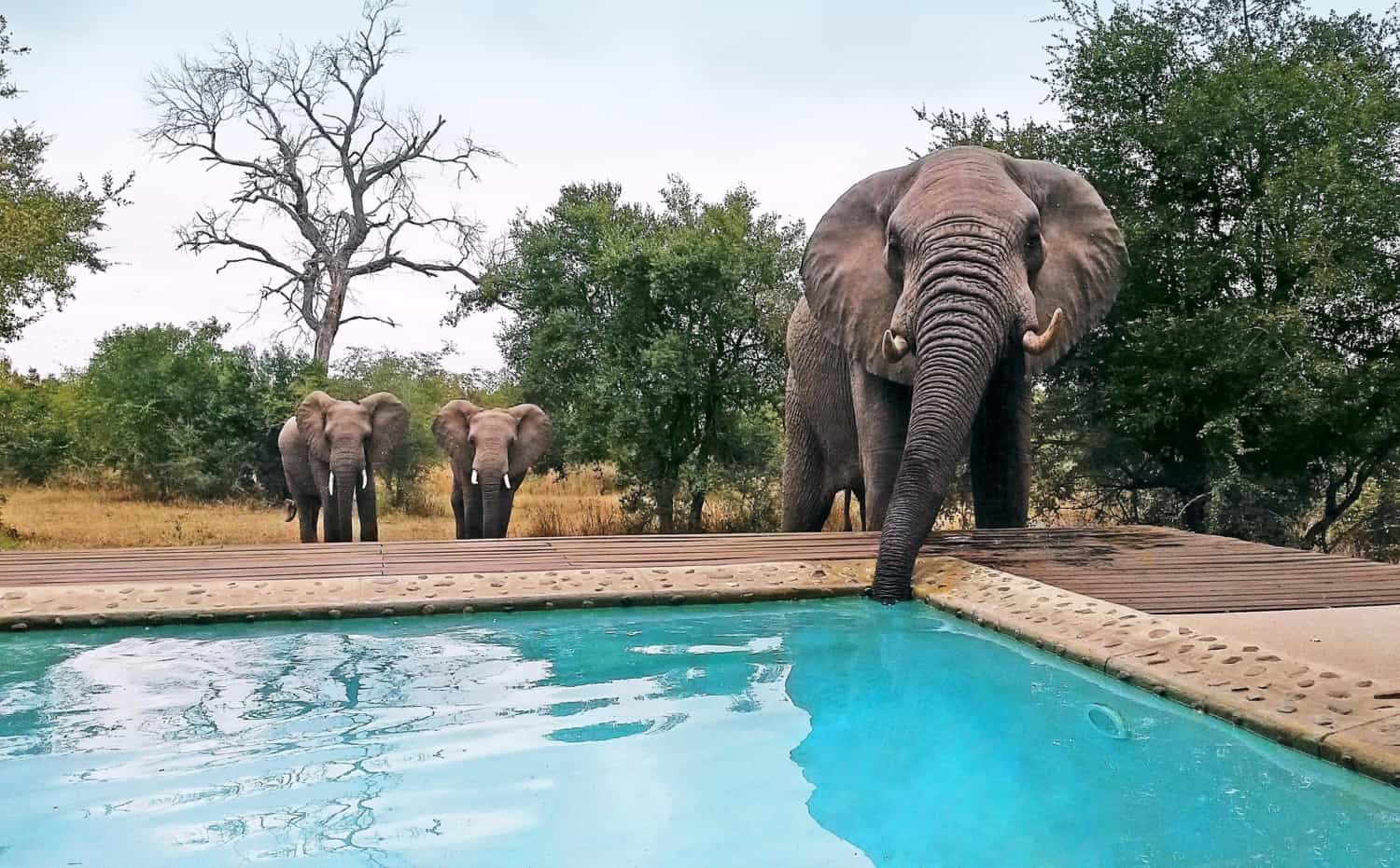 Leopard Hills Africa Luxury Escapes 27